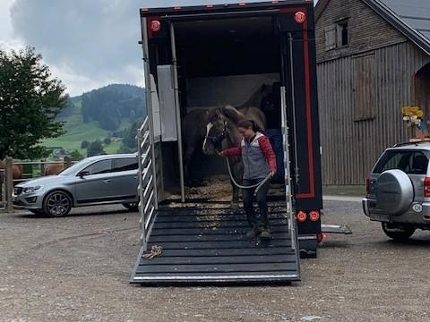Unseren neuen Verkaufspferde sind gut von Island angekommen.
