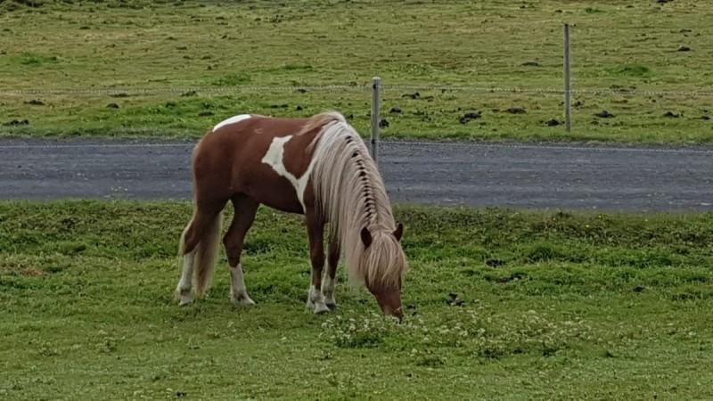 Bald kommen neue Verkaufspferde….