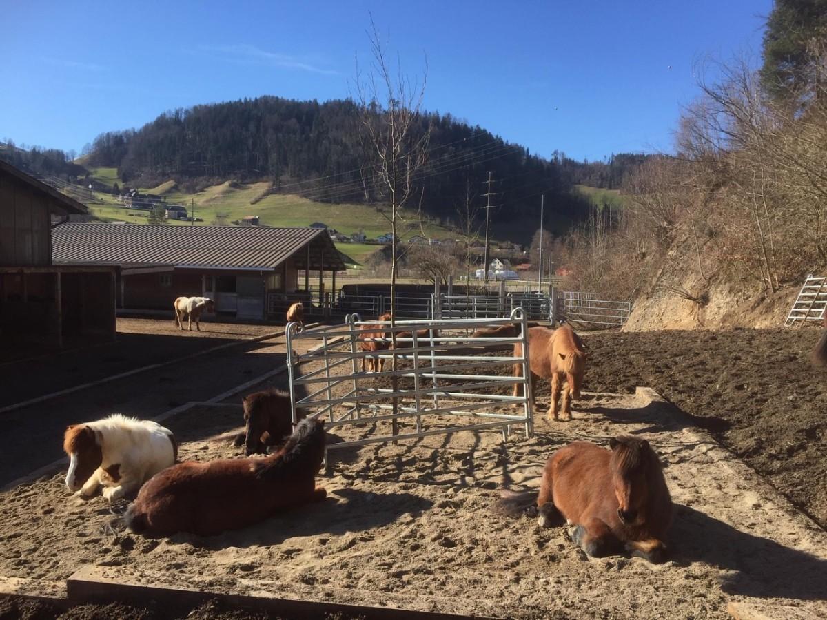 Unsere Pferde geniessen den neu gestalteten Schnitzel-Paddock Platz