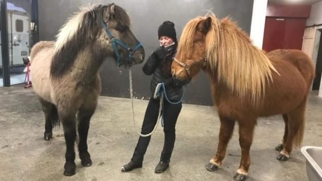 Schon bald sind unsere neuen Verkaufspferde da